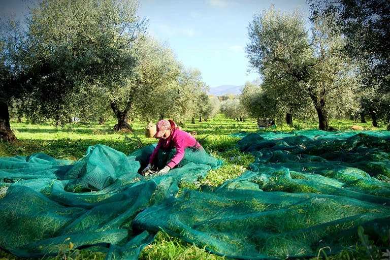 Small Farmers and Producers in Italy Organize to Promote Artisanal Oils